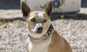 Aquiles Ref PD101708 Adopted