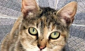 KITTY Ref 301749 Adopted